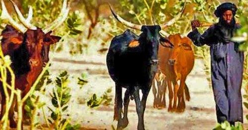 Ethnic Fulani Muslim herdsman -Wikipedia