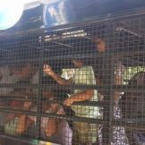 Pakistani Christian asylum seekers brought to court caged in police van in Dec. 2015