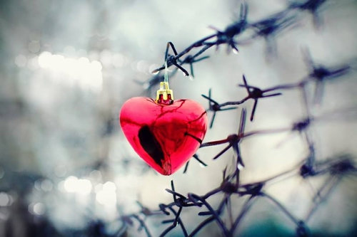 Barbed Wire Heart Vocie of the Persecuted